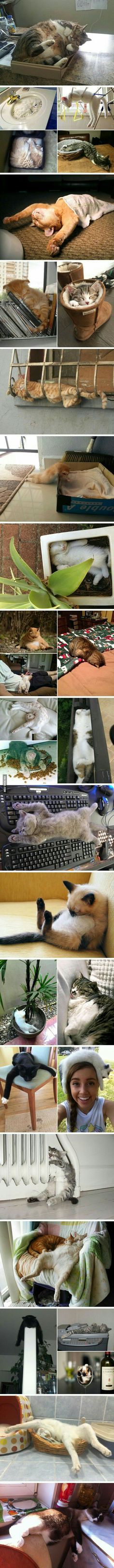 Die Kunst des Schlafens. Katzen wissen wie's geht