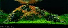 2012 AGA Aquascaping Contest First Place Aquatic Garden, 120L ~ 200L by Sim Kian Hong, Malaysia
