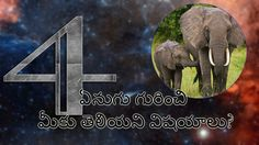 Elephant Unknown Facts in Telugu | telugufactstrendy