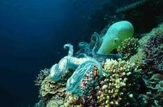 cool octopus pictures