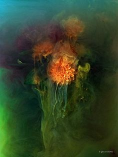 Giles Revell, Photographer · Projects · Flora Pigmented Still Lifes