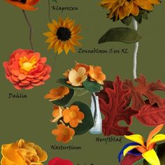 Bloem en Seizoen: herfstbloemen