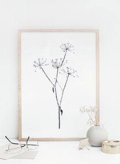 Image of September Flowers//