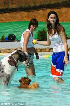 Dogs Make A Big Splash At Swimming Pool And Water Park Made Just - Purpose built canine pool every dogs dream