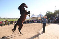 Horse, Art and Wine Festival (Festival del Caballo, Arte y Vino) When: June 9th
