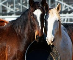 wee r hungry!! -the equus