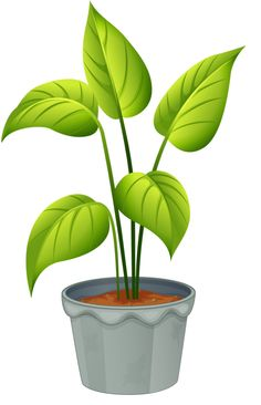 Plant in flower pot [converted] .png | MY CUTE GARDEN | Pinterest ...