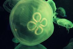 #Green #Jellyfish #Sea #Aquarium