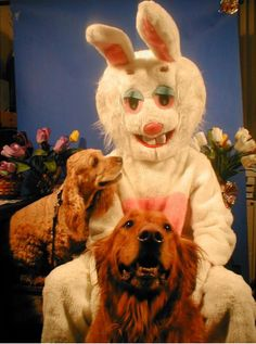 The only thing worse than a creepy Santa is a creepy Easter Bunny. Check out these funny Easter pics and be grateful it's not you in the photo! Funny Easter Pictures, Creepy Pictures, Easter Funny, Easter Dogs, Images Terrifiantes, Evil Bunny, Haunted Attractions, Horror, Funny Bunnies