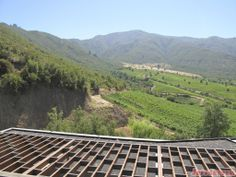 If (and when) I come back to Chile, I am going to be sure to visit the Colchagua Valley wine area longer