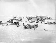 Ocean Camp, drifting on the ice of the Weddell Sea