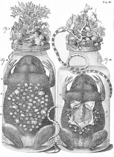 Diorama Specimen Jars of Frederik Ruysch
