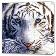 Tiger jigsaw puzzles are fun to do because tigers are such gorgeous animals. Tiger jigsaw puzzles are a fun way for the family to enjoy time together. Pet Tiger, Tiger Face, Tiger Cubs, Maltese Tiger, Bear Cubs, Tiger Head, Beautiful Cats, Animals Beautiful, Cute Animals