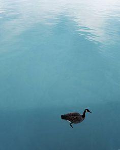 Just keep swimming . . #CCXXXVII . . . . #girlsthatwander#sheisnotlost#darlingescapes#photography#exploremore#lifeofadventure#travelgirls#chicago#letsgosomewhere#femmetravel#wanderlust#wonderful_places#openmyworld#aesthetic#travelgram#fantastic_earth#girlsmeetglobe#dametraveler#nakedplanet#girlsborntotravel#prettycities#vsco#doyoutravel#vscocam#igtravel#passionpassport#awesomeearth#ladiesgoneglobal#chicago by ang237_. beautifuldestinations #nature_perfection #outdoors…