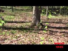 A Possible Bigfoot Capture in Mexico