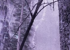 Trees Growing in Silo by Tony Grider- Purple Landscape Edition - Available for purchase at Griderimages.com and Fine Art America.