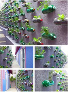 A recycled plastic bottle herb garden