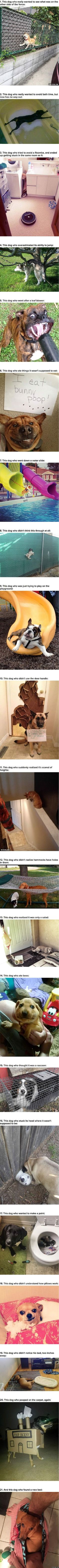21 Dogs Who Made Poor Life Choices