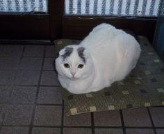 Yuki's 'tea-kettle' position