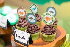Cupcakes from Prehistoric Dinosaur Birthday Party at Kara's Party Ideas. See the preserved details at karaspartyideas.com!