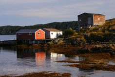 Great Brehat NFLD