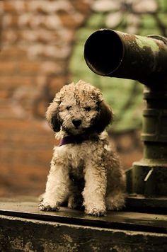 Mascota-can