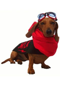 """Mila Miesner, Actress: Wiener Dog Nationals. Mila's large screen debut happened in 2012 with the film called the R.A.D.I.C.A.L.S. (2012) as a bomb dog in a comic book come to life. Then in the summer of 2012 it was on to bigger things with the Shooting of """"Wiener Dog Nationals"""" the movie (2013). She is shooting the sequel """"Wiener Dogs Internationals"""" with her Little sister Ezri Miesner. They are playing Shelly Jack and Trixie. Mila is also ..."""
