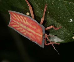 Bug in Cuc National Park - Vietnam.  Photo: segraser.  -kc