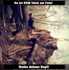 Der Baum am Teich !
