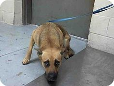 ❤️❤️PLEASE HELP ME FIND MY FUREVER FAMILY. PRECIOUS SOUL LOOKS SO SCARED, PLEASE HELP HIM❤️❤️Conroe, TX - German Shepherd Dog. Meet A288185, a dog for adoption.  https://bestproductsfor.com/pets