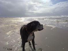 Dog + Beach= perfect