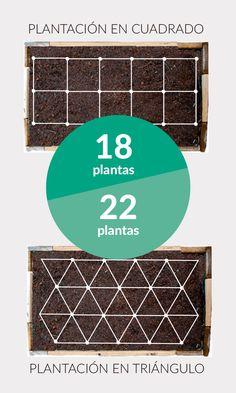 Plantando en triángulos en lugar de en cuadrados conseguimos más productividad en el mismo espacio. Más #trucos para el #huerto en el enlace.