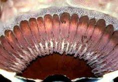 human eye anatomy - Buscar con Google