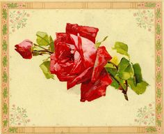 Antique Images: Free Image of Flower: Vintage Image of Red Rose