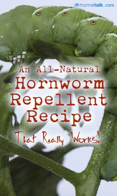 An {All-Natural Hornworm Repellent} That Really Works!
