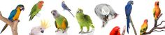 Pet Parrot and Birds quiz to help you choose the right pet for you. Take this quiz by Lafeber. Small Birds, Love Birds, Pet Birds, Parrot Pet, Parrot Toys, Choose The Right, You Choose, Parrot Food Recipe, Cool Pictures