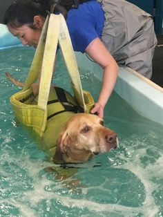 """Hank actually started to swim. For real. With only one front leg."" #Tripawd"