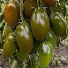 Heirloom Tomato Plants | Heirloom Tomato 'Black Icicle'