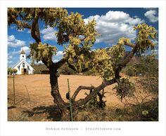 """Jumping"" Cholla Cactus, Superstition Mountains, Arizona"