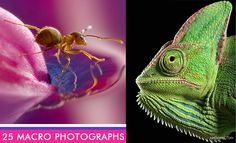 100 Most Beautiful Macro Photography examples for your inspiration. Read full article: http://webneel.com/webneel/blog/25-most-beautiful-macro-photography-your-inspiration-10-tips-beginners | more http://webneel.com/wild-life | Follow us www.pinterest.com/webneel