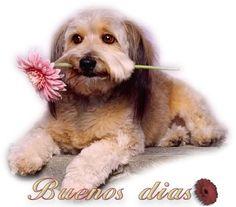 Perrito con una flor en la boca te da los Buenos dias