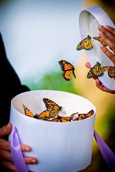 butterflies being released from a box at wedding ♥