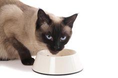 Cómo relajar a un gato - 7 pasos (con imágenes) - unComo
