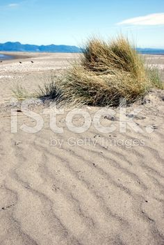 Sand Dunes and Tussock, New Zealand Beachscape royalty-free stock photo Royalty Free Images, Royalty Free Stock Photos, Image Now, Dune, New Zealand, Grass, Sea, Water, Photography