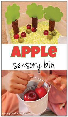 This delightful apple sensory bin invites children to engage in rich dramatic play and to develop their fine motor skills. This is a perfect bin for a preschool apple unit! Fall Activities For Toddlers, Apple Activities, Sensory Activities, Sensory Play, September Preschool, Fall Preschool, Preschool Apples, Preschool Ideas, Kindergarten Sensory