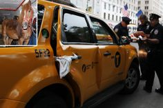 Horse runs wild, dragging carriage and hitting taxi inNYC