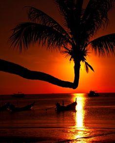 E pra dar um pouquinho mais de inspiração para o dia de hoje que tal esse por do sol incrível de Koh Tao na Tailândia? Nós já queremos sentar nessa palmeira e ficar ali admirando até que o sol desapareça no horizonte. #calcathai #tailandia #pordosol #inspiracao #kohtao #beleza #natureza #agradecimento