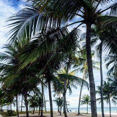 Mornings at home are the best  Bom dia #Recife! Hoje vou passar o dia gravando pro YouTube sugestões de vídeos?? #home by camilacoutinho