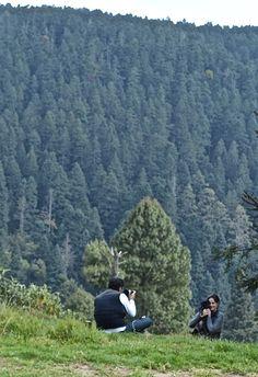 Bosque de Pinos y Oyameles en La Villa del Gran Oyamel en Edo.Mex.