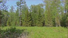 Поход в лес Огромные поля лесных цветов Сибирская орхидея Кукушкины слез...